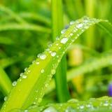 下雨在一片绿色叶子的下落本质上 免版税库存照片