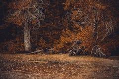 下雨在森林秋天森林和大雨中 雨水滴在水的 免版税库存照片
