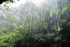 下雨在森林里 免版税库存图片