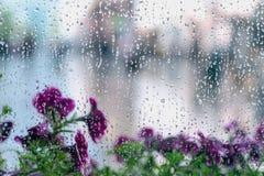 下雨在湿窗口和街道紫色花的下落后边,被弄脏的城市bokeh 多雨天气,季节的概念,现代 库存图片