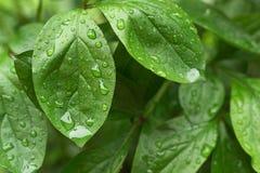 下雨在生长植物的绿色叶子的下落 免版税库存图片