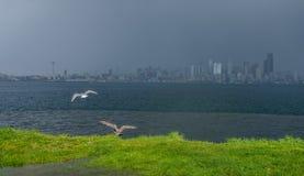 下雨在西雅图 免版税库存图片
