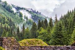 下雨天的山森林 免版税库存图片