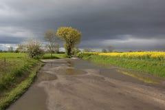 下雨春天 库存图片