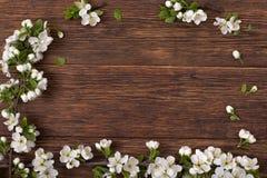 下雨 一个开花的李子的分支在一张棕色桌上的 免版税库存照片