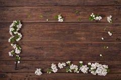 下雨 一个开花的李子的分支在一张棕色桌上的 库存图片