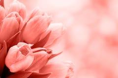 下雨 在bokeh背景的郁金香花束 库存照片