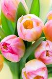 下雨 在bokeh背景的郁金香花束 免版税库存图片