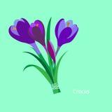 下雨 番红花,番红花 Flet设计 向量 免版税库存图片