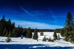 下雪在一个山草甸在Sumava,捷克共和国 免版税图库摄影