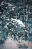 下雪在一棵树的分支在晚上 免版税图库摄影