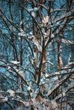 下雪在一棵树的分支在晚上 免版税库存图片