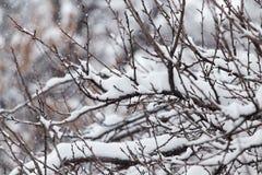 下雪在一棵树的分支本质上 库存照片