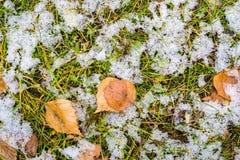 下雪在一片绿草和黄色叶子 免版税库存图片