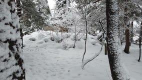 下雪在公园,冬天季节 股票视频