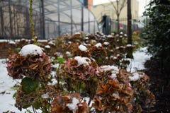 下雪在叶子,利兹,西约克郡,英国 免版税库存图片
