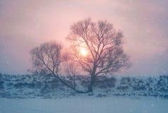 下雪在圣诞节冬天在村庄 免版税图库摄影