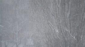 下雪在大不生叶的白扬树背景  股票录像