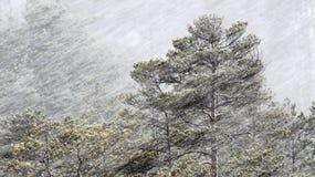 下雪在春天 库存照片