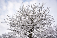 下雪在树早午餐在英国冬天2 库存图片