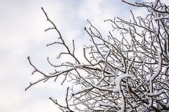 下雪在树早午餐在英国冬天3 免版税图库摄影