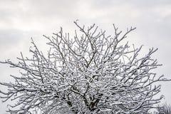 下雪在树早午餐在英国冬天1 免版税库存图片