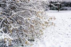 下雪在树早午餐在英国冬天5 免版税库存图片