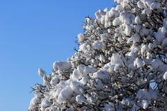 下雪在树枝反对蓝天背景 免版税库存照片