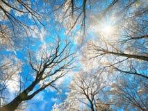 下雪在树梢反对深蓝天 免版税库存图片