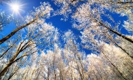 下雪在树梢反对深蓝天 库存图片