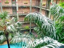 下雪在棕榈树 库存照片