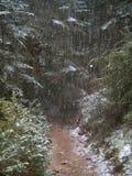 下雪在森林里 免版税库存照片