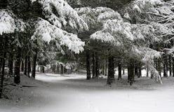下雪在森林 免版税库存图片