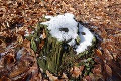 下雪的树桩 免版税库存图片