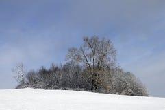 下雪的树,开胃菜,法国 库存图片