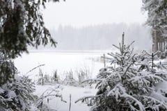 下雪的池塘的看法通过云杉的` s早午餐 库存照片