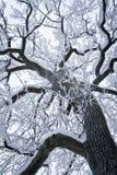 下雪的结构树 库存照片