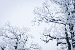 下雪的结构树 免版税库存照片