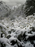 下雪的风景 免版税图库摄影