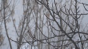 下雪结构树 股票视频