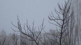 下雪结构树 影视素材