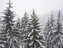 下雪结构树 免版税库存图片