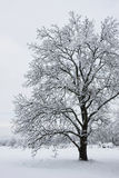 下雪结构树 免版税库存照片
