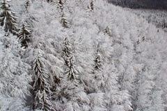 下雪结构树 库存图片