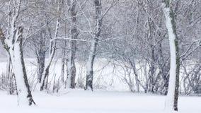 下雪 股票视频
