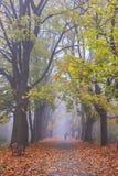 下雾的夜晚在老公园 免版税库存照片