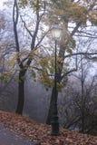 下雾的夜晚在老公园 免版税库存图片