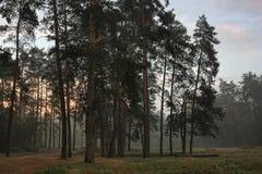 下雾的夜晚森林 免版税库存照片