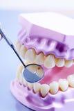 下颌模型和牙齿镜子 检查牙 免版税库存照片
