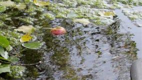 下水道水 影视素材